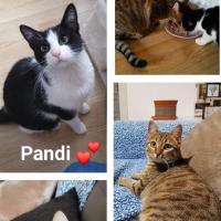 Photo de Pandi et Floette - Chat Femelle de race inconnue