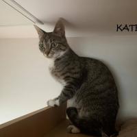 Photo de KATE - Chat Femelle Européen