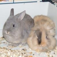 Avec mon frère, Choco, on est encore un peu timide