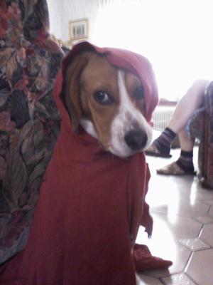 Dakotah Sarfati - Beagle