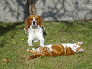 Dakotah & Papaye - Beagle