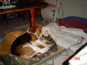 Dakotah & Billy - Beagle