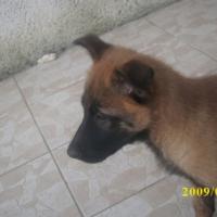 Photo #214660 de Edgie de l'esprit canin