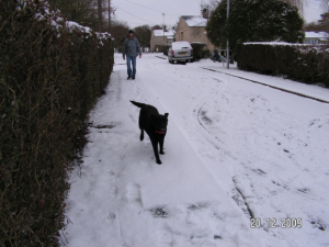 la neige - Labrador Retriever