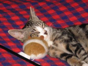 je dors avec la souris que la mômman de JUJU m'a offert -