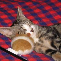 je dors avec la souris que la mômman de JUJU m'a offert