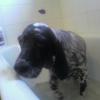 je n'aime pas beaucoup prendre de bain !!!