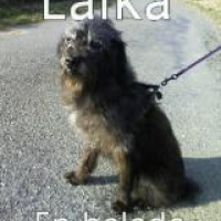 Photo #235088 de Laïka