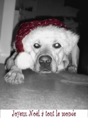 Joyeux Noel - Labrador Retriever