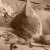 Photo #242212 de Kitkat