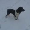 BB a la neige