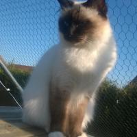 Photo de l'animal n°38686