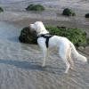 promenade à la mer