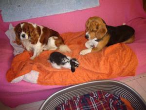 moi , mon copain Ruby et babluche - Beagle