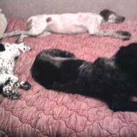sieste a trois