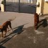 Fox et Stella - 02/2011