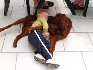 Fox, Stella et les enfants - 04/2011 - Setter Irlandais Rouge
