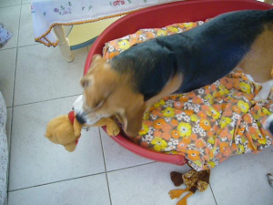 Photo #274522 de CIRRUS - Beagle