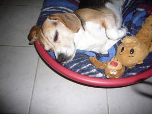 Photo #274523 de CIRRUS - Beagle