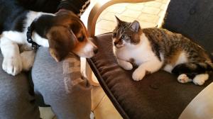 Photo #274579 de Molly - Beagle
