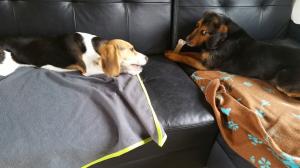 Photo #274587 de Molly - Beagle