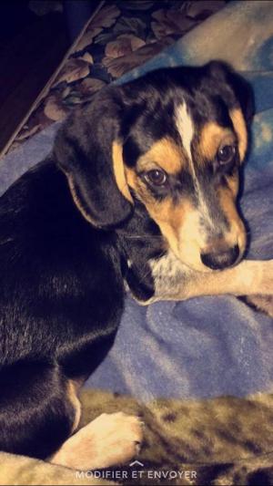 Premiere photo de Clyde avec sa nouvelle famille - Beagle