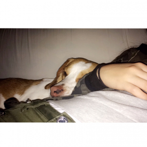 Photo #275559 de Magnum - Beagle