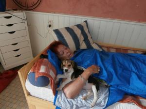 Photo #276009 de Herzy surnommée Happy - Beagle