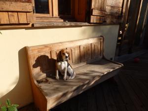 fripouille se dore la pilule au soleil - Beagle