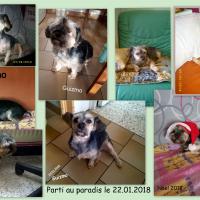 Photo #277508 de Guizmo