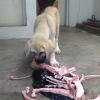 Attention chien ne partageant pas sa gamelle (mais respectueux du maître qui nourrit, ne commence jamais sans autorisation)