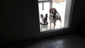 Photo #278741 de LEMKA - Beagle