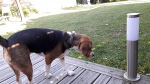 Photo #278748 de LEMKA - Beagle