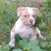 Puppy Nacho