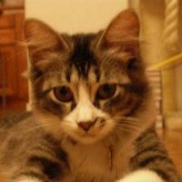 Photo de profil de Capucine