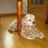 Photo de profil de Upsa