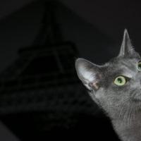 Photo de profil de Daïquiri