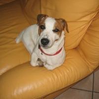 Photo de profil de Mouche