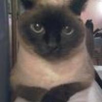 Photo de profil de Boutchou