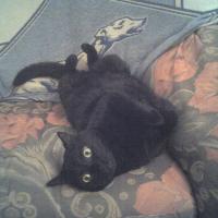 Photo de profil de Taïs