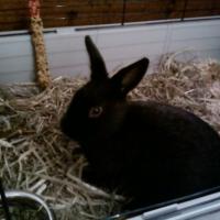 Photo de profil de Lapinou