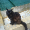 Photo de Salem