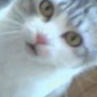 Photo de profil de Chaussette