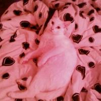 Photo de profil de Ragga