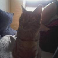 Photo de profil de Strass