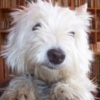 Photo de profil de Scotie