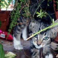 Photo de profil de Totore