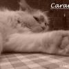 Photo de Caramel