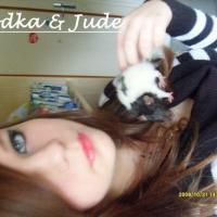 Photo de profil de Vodka