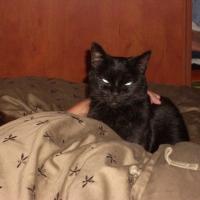 Photo de profil de Le chat